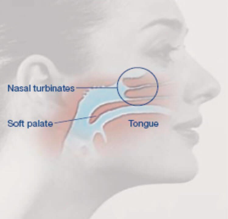 Mastoid Process Location Functions Medical Ailments