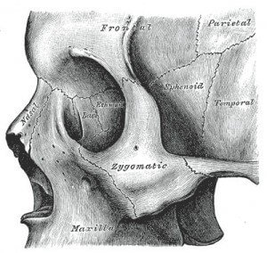 Sphenoid Bone Picture