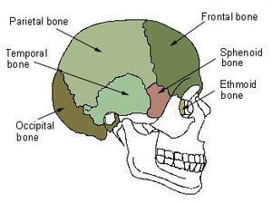 Pictures of Sphenoid Bone