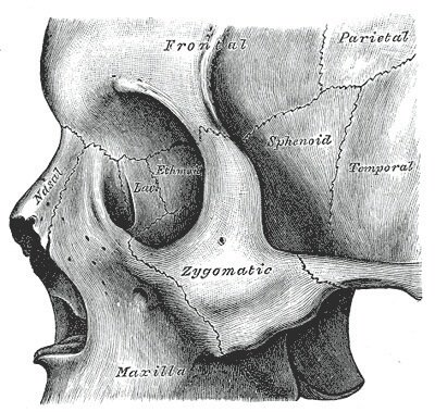 sphenoid bone - anatomy images & location, Human Body