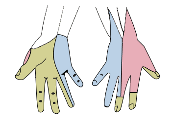 Hand innervation, dermatomes picture