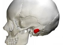 Mastoid Process image