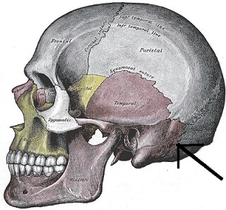Mastoid Process picture
