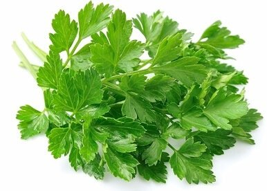 Parsley Uric Acid