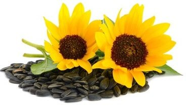 Sunflower seeds Vitamin E