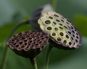Trypophobia photos