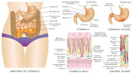 Stomach Pain After Eating Guide: Abdominal Pain In Adult And Children